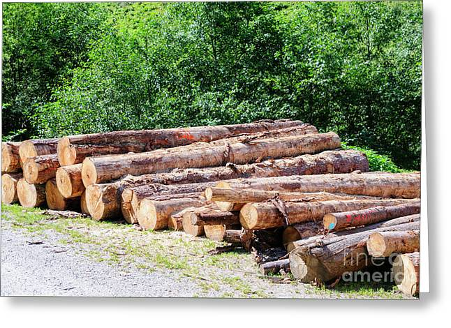 Timber Industry.  Greeting Card by Ilan Rosen