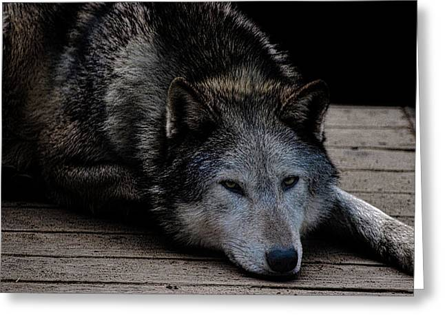 Timber Wolves Greeting Card by Martin Newman
