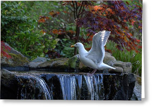 Time For A Bird Bath Greeting Card
