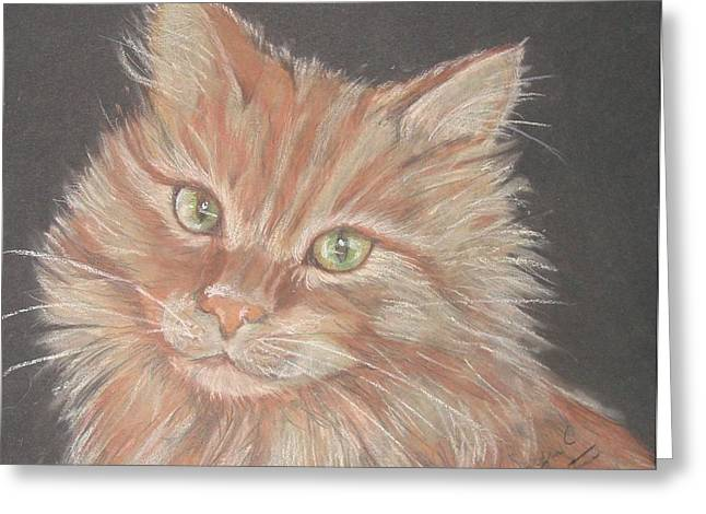 Time For Your Closeup Miss Tia Greeting Card by Sandra Valentini