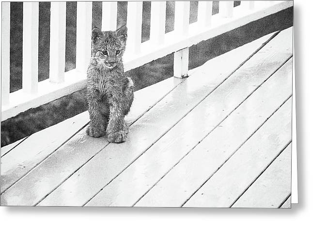 Time Out Bw Greeting Card