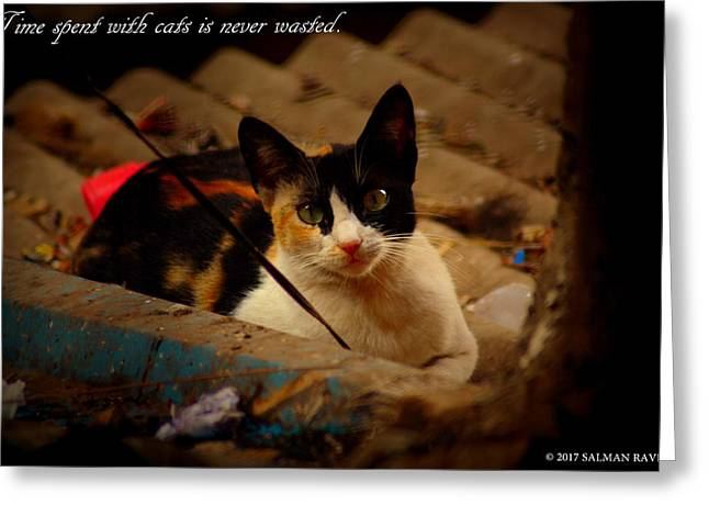 Time Spent With Cats. Greeting Card