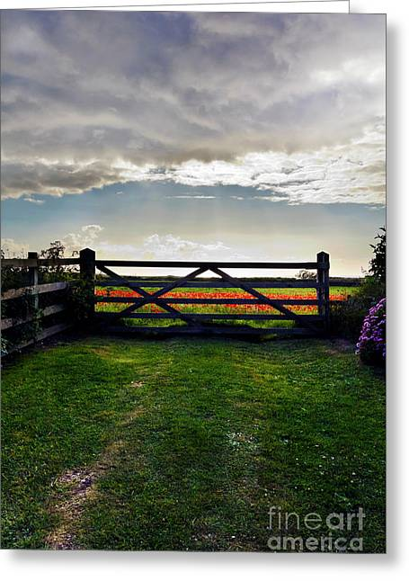 Time To Go Home Greeting Card by Terri Waters