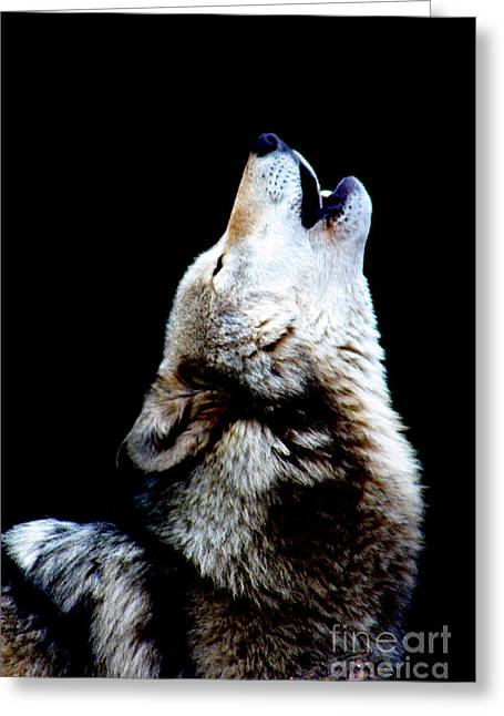 Time To Howl Greeting Card by Nick Gustafson