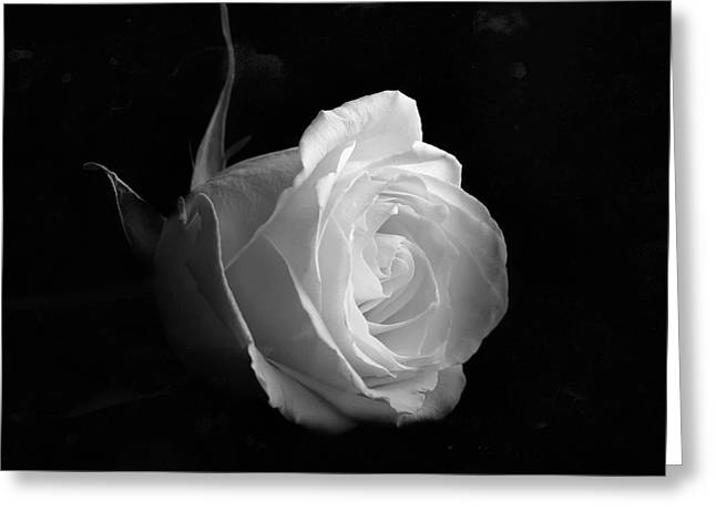 Timeless Beauty Greeting Card by Roy McPeak