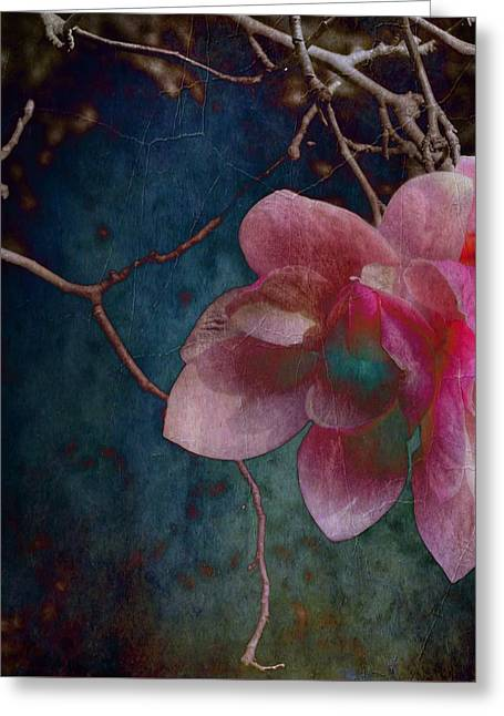 Timeless - Magnolia Blossoms  Greeting Card
