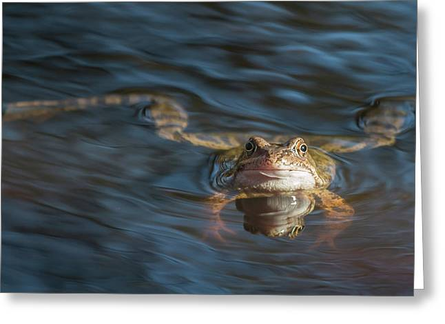 Timeout From The Annual Frog Ball Greeting Card