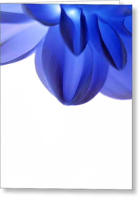 Timid In Blue Greeting Card