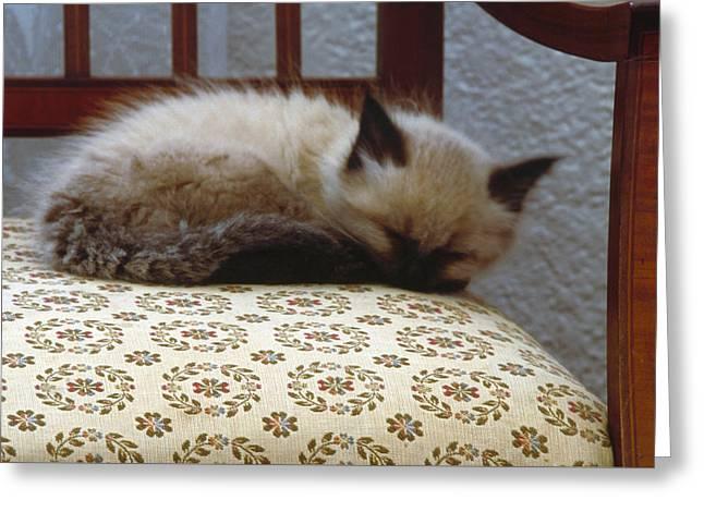 Timothy - Sleeping Greeting Card