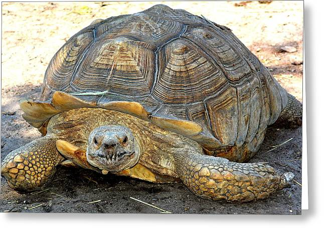 Timothy The Giant Tortoise Greeting Card