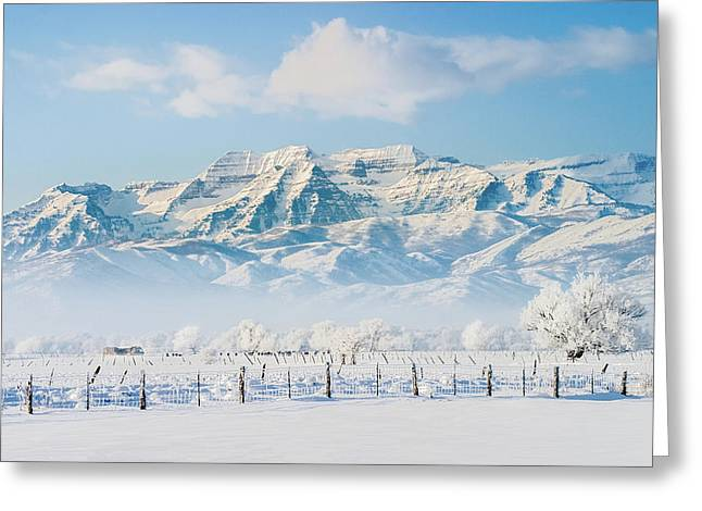 Timp In Winter Greeting Card
