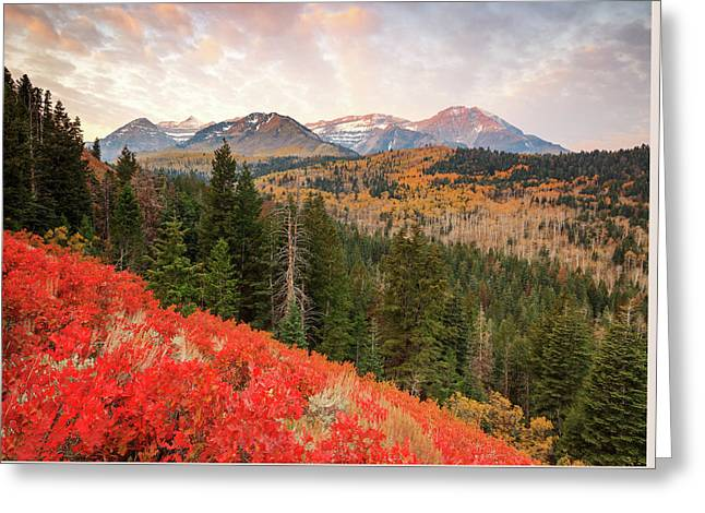 Timp With Red Oak Greeting Card by Johnny Adolphson