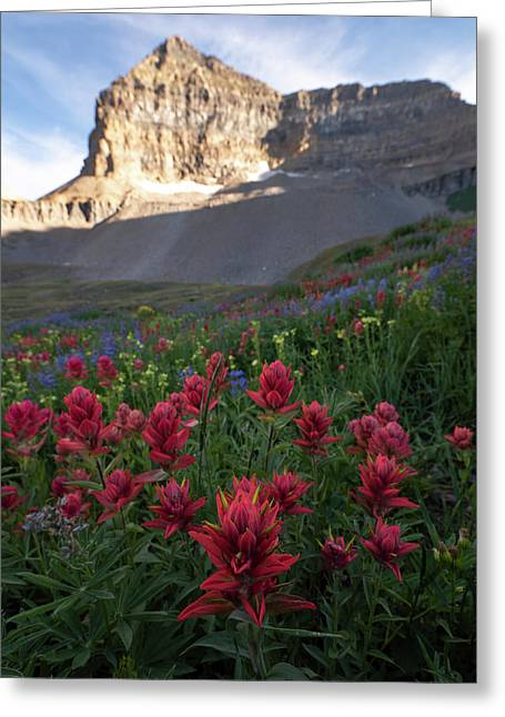 Timpanogos Paintbrush Greeting Card