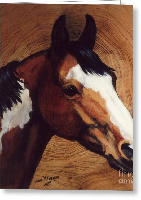 Tingeys Fancy   Paint Horse Greeting Card by JoAnne Corpany