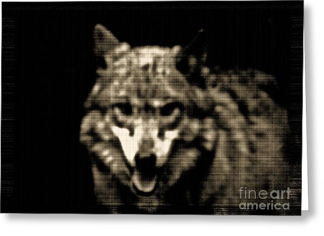 Greeting Card featuring the photograph Tinted Wolf by Debra     Vatalaro