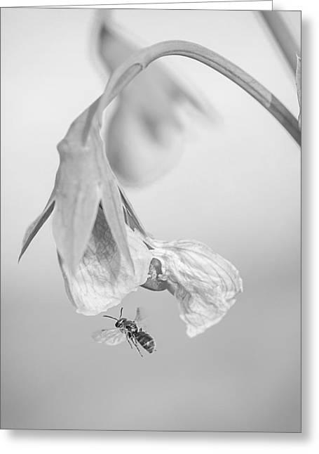 Tiny Bee Around Tiny Pea Greeting Card