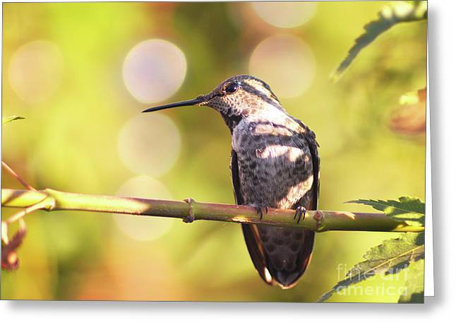 Tiny Bird Upon A Branch Greeting Card