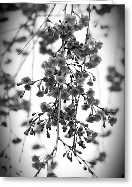 Tiny Buds And Blooms Greeting Card