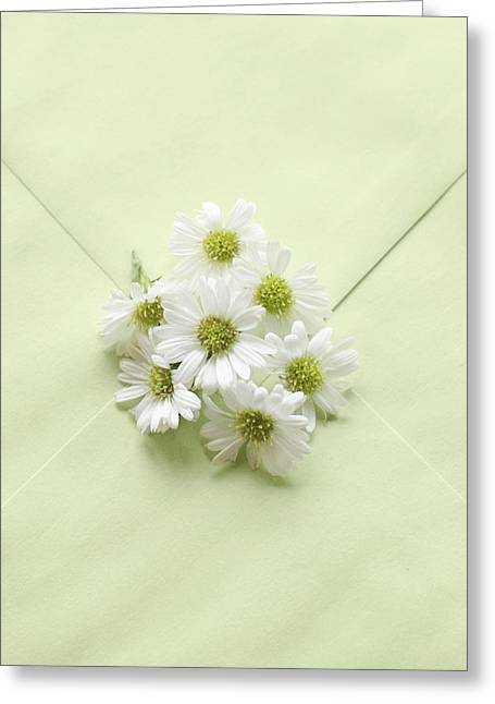 Tiny Daisies On Green Envelope Greeting Card