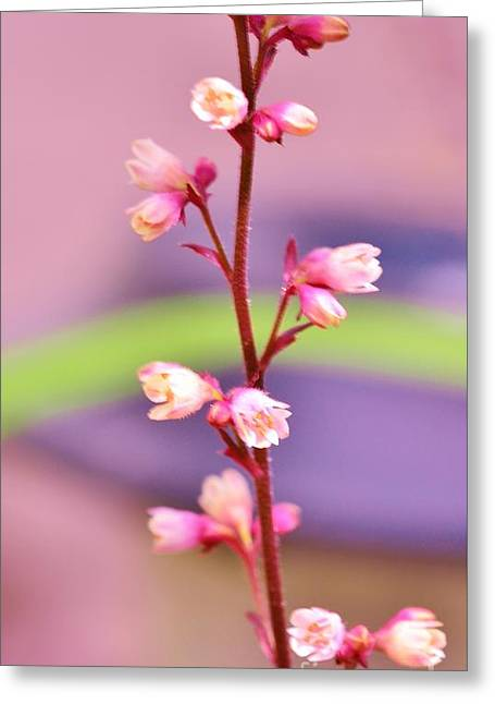 Tiny Flowers Greeting Card by Kathleen Struckle