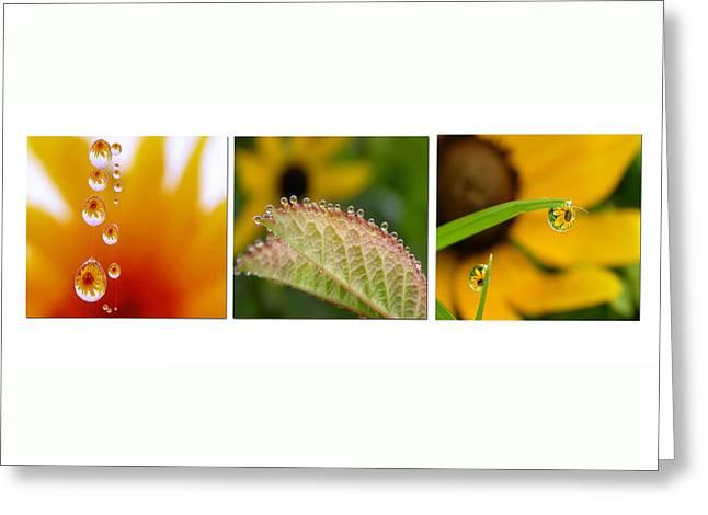 Tiny Miracles Greeting Card by Linda  Murphy