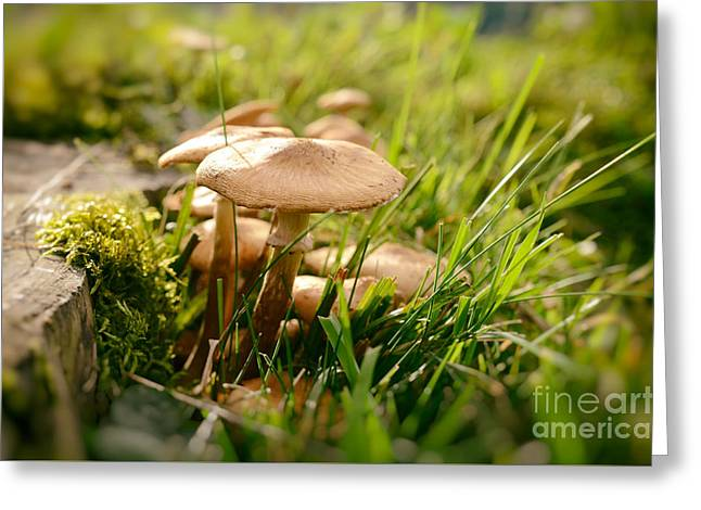 Tiny Mushrooms In Autumn Greeting Card by Sabine Jacobs