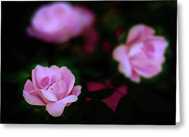 Tiny Pink Azaleas Greeting Card