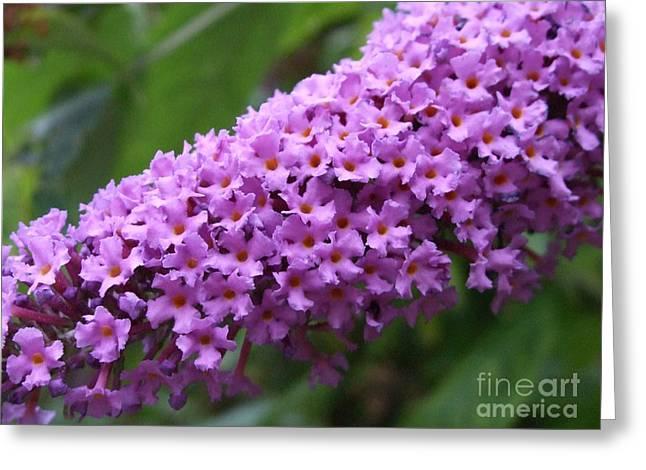 Tiny Purples Greeting Card by Deborah Brewer