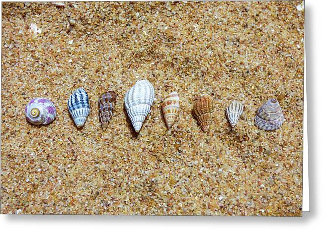 Tiny Seashells On The Sand Greeting Card