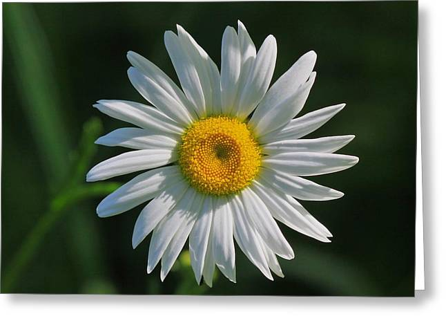Tiny Sunshine Greeting Card by Robert Pearson