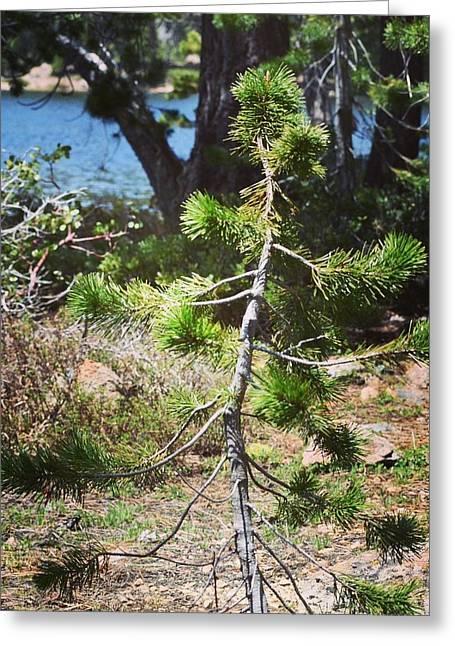 Tiny Tree Greeting Card