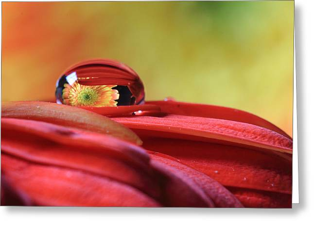 Tiny Water Drop Reflections Greeting Card