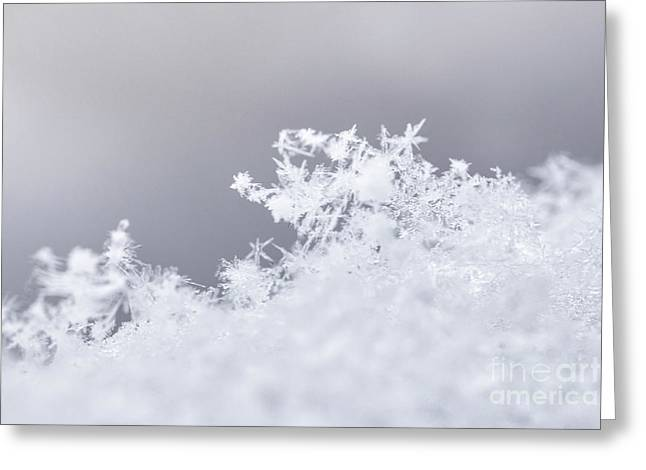Greeting Card featuring the photograph Tiny Worlds II by Ana V Ramirez