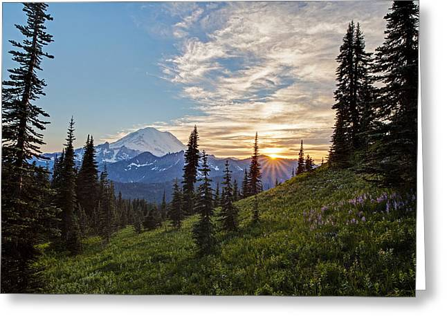 Tipsoo Field Of Summer Greeting Card by Mike Reid
