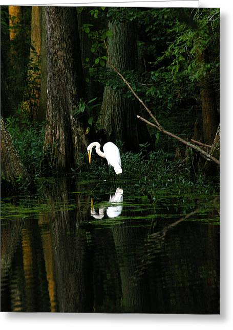 Tiptoe 2 Greeting Card by Don Prioleau