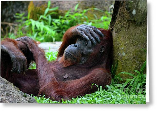 Tired Female Orangutan Ape Rests Against Tree With Hand On Her Head Greeting Card