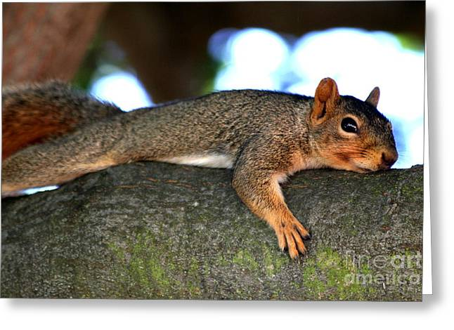 Tired Old Squirrel . R6622 Greeting Card