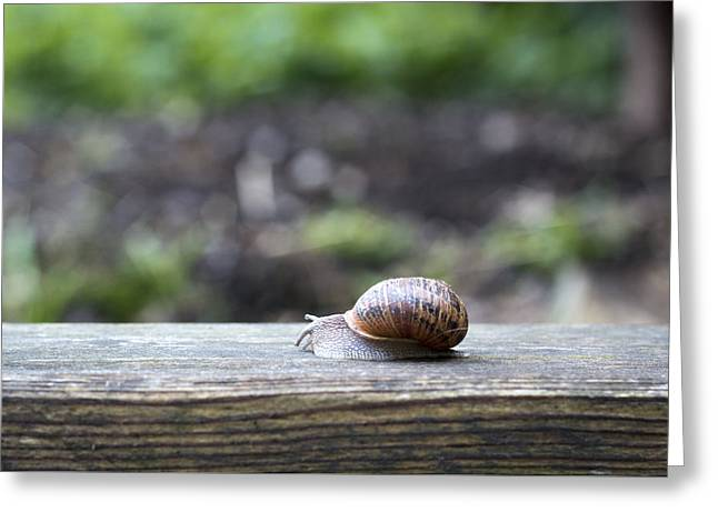 Tired Snail Greeting Card
