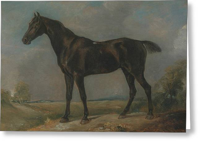 Title Golding Constables Black Riding Horse Greeting Card by John Constable