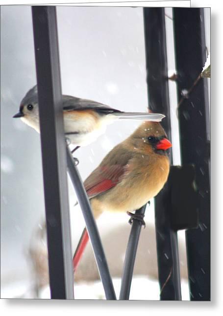 Titmouse And Cardinal Greeting Card