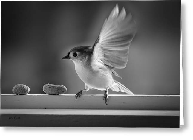 Titmouse And Peanuts Greeting Card