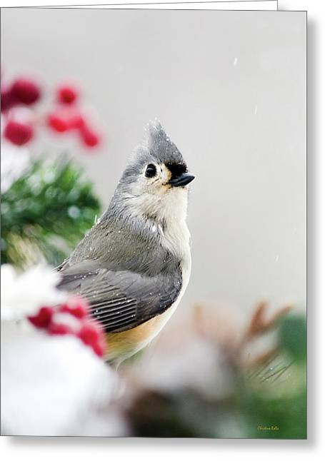 Greeting Card featuring the photograph Titmouse Bird Portrait by Christina Rollo