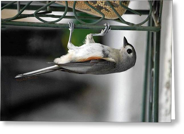 Titmouse Trickery Greeting Card by DigiArt Diaries by Vicky B Fuller