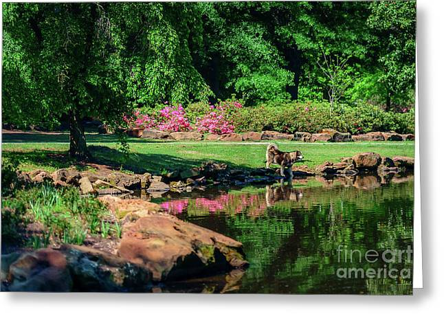 Tking A Break At The Azalea Pond Greeting Card by Tamyra Ayles