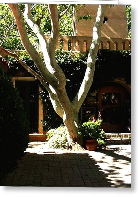 Greeting Card featuring the photograph Tlaquepaque Sycamore by Fred Wilson