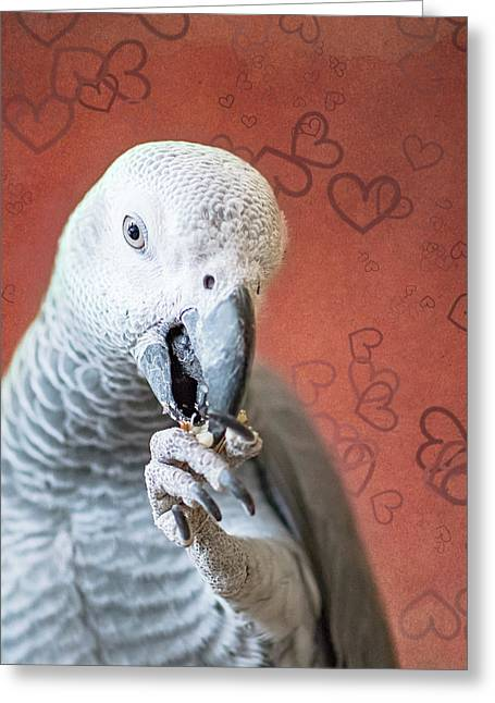 To Be Owned By A Grey Is To Know Love Greeting Card