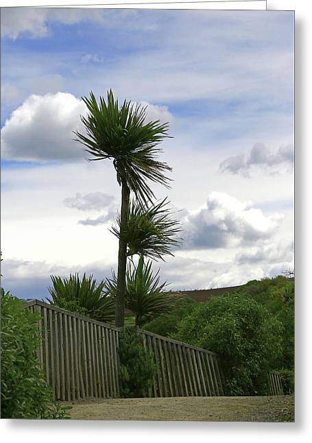 Greeting Card featuring the photograph To Kouka Cabbage Tree by Nareeta Martin