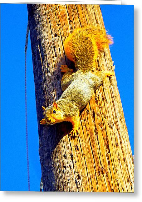 To Squirrels And To Me Greeting Card