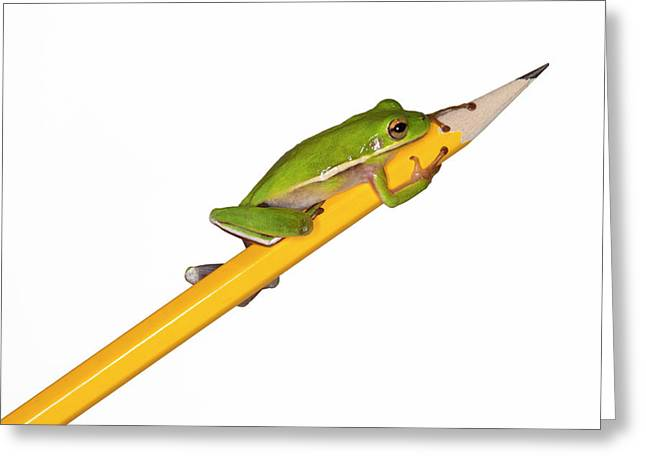 Tree Frog Greeting Cards - To the Point Greeting Card by Janet Fikar
