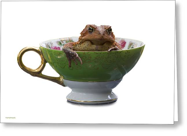 Toad In A Teacup Greeting Card by Ron Jones
